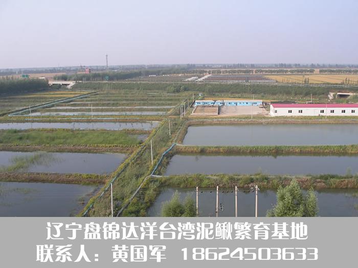 盘锦泥鳅养殖技术