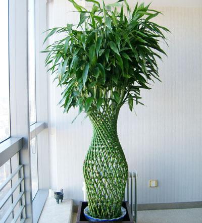 大型植物-富贵竹笼.jpg