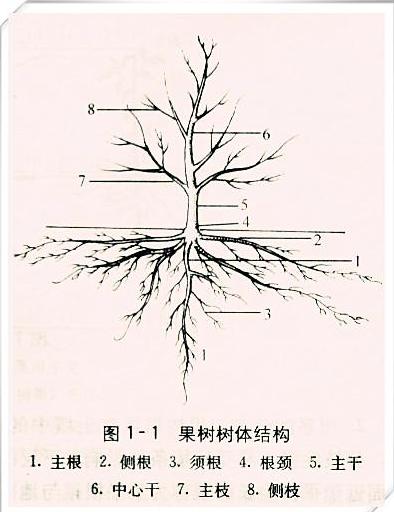 果树烂根2.png