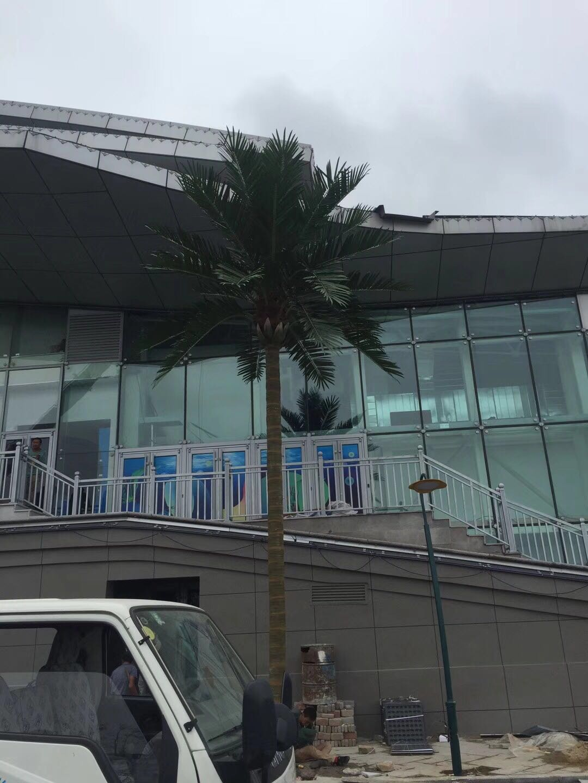 威高海洋館大型椰子樹