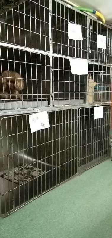 大连宠物医院