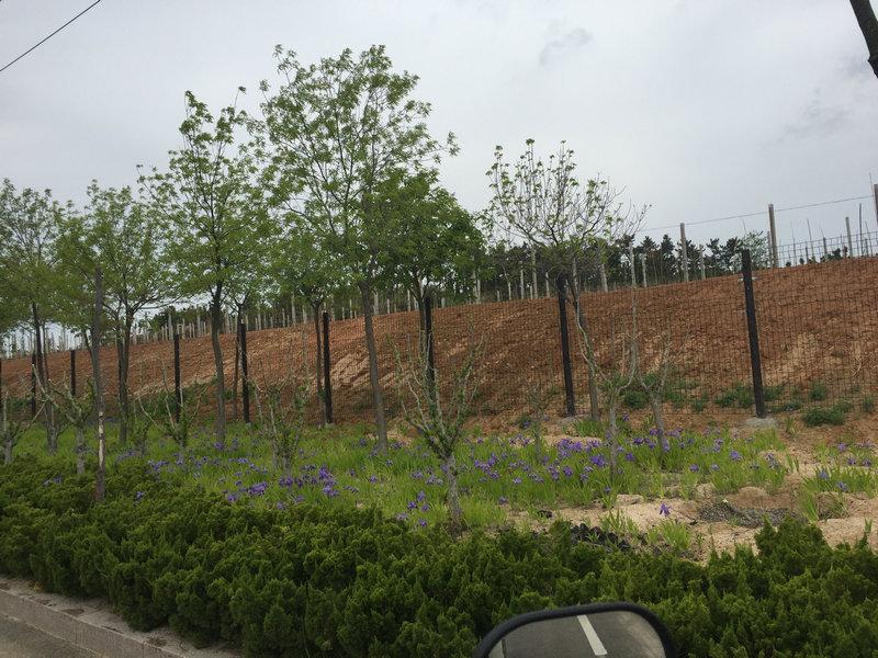 威高草廟子葡萄園圍擋