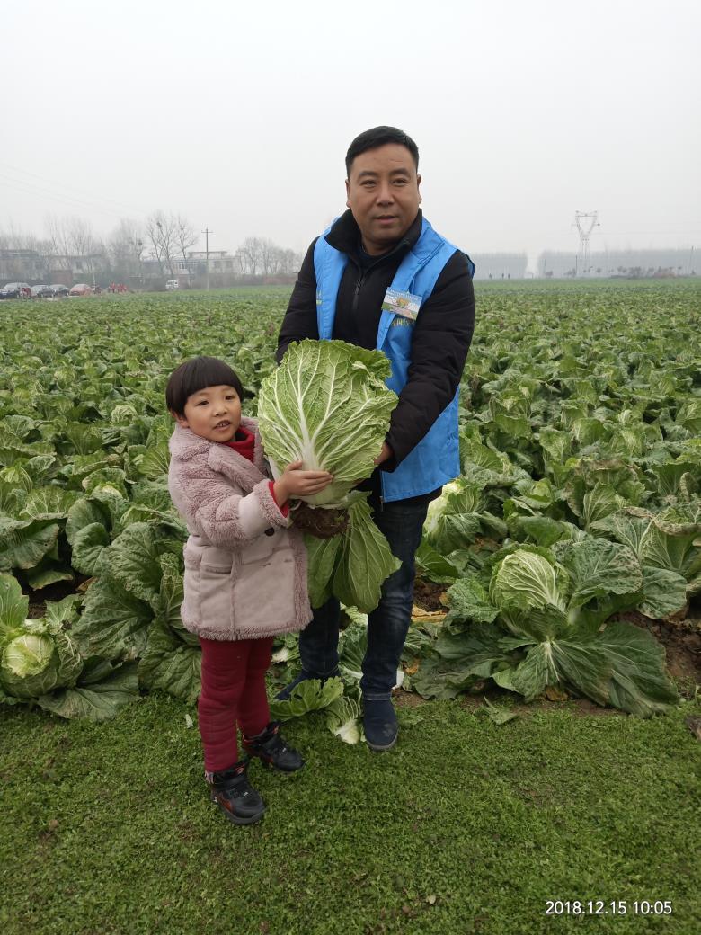2018邓州蔬菜滞销