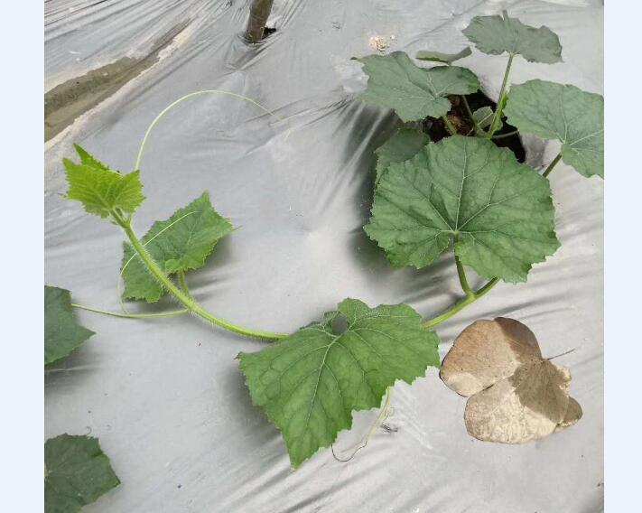 蔬菜种植地膜