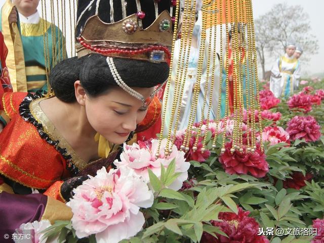 第37届中国洛阳牡丹文化节赏花启动仪式即将开幕,更有最新花情预报!