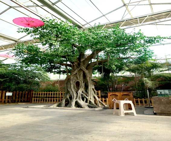 室内景观仿真树样板图