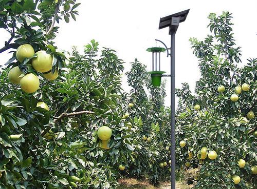 橘子园太阳能不粘网杀虫灯