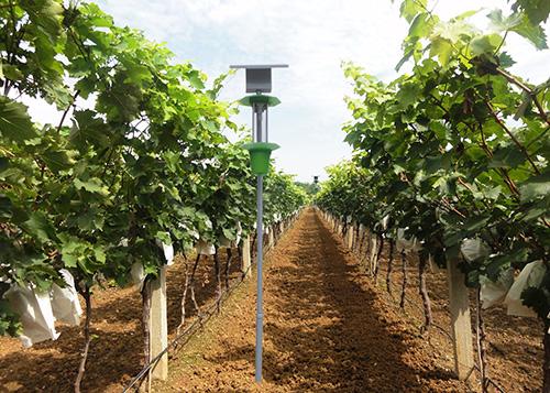 不粘网太阳能杀虫灯在果园的应用