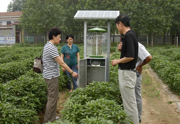 绿色园林装灯工程