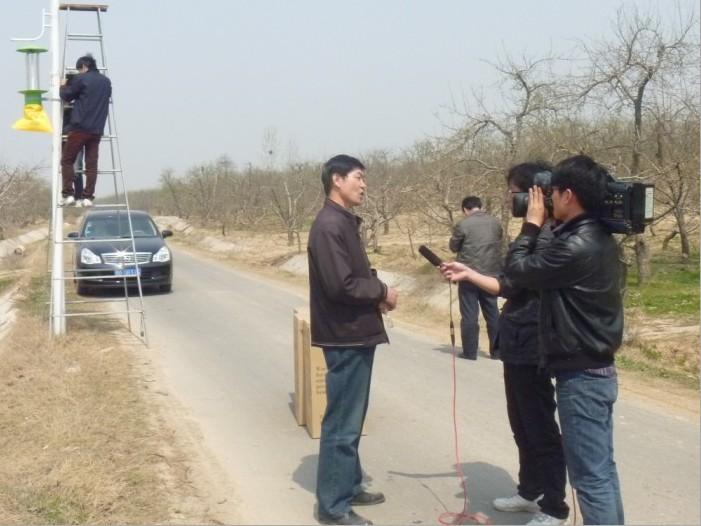 砀山梨园安装杀虫灯记者采访