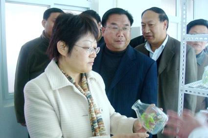 市委副书记张琼