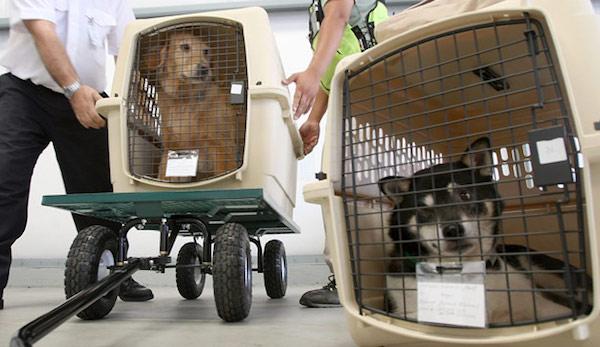 重慶寵物空運