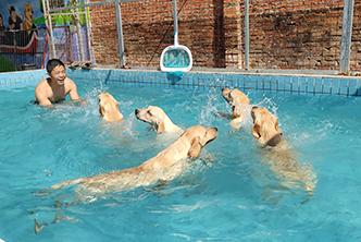 狗狗游泳馆