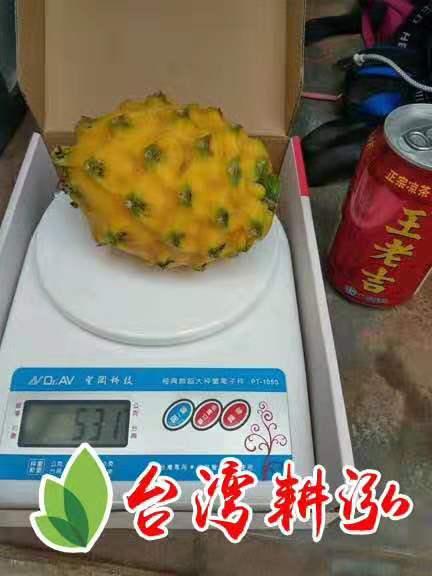 黄皮火龙果
