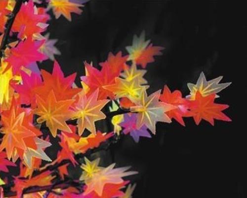 枫叶花枝花朵及树干