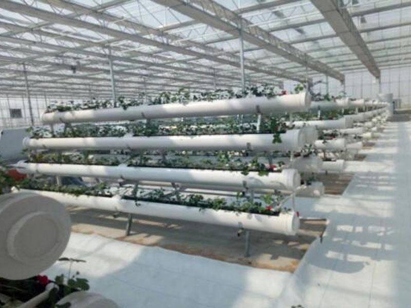 滴灌设备大棚技术应用实景