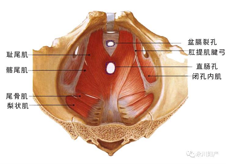 盆腔器官脱垂