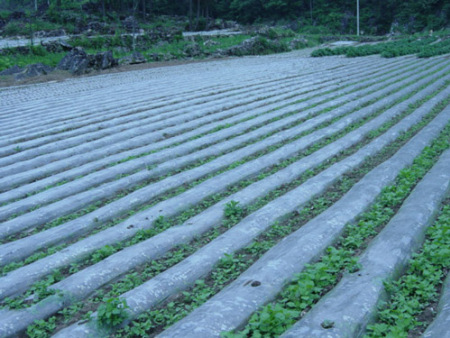 农用除草地膜