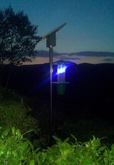 茶园杀虫灯