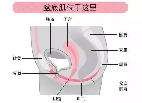 产后盆底康复治疗仪