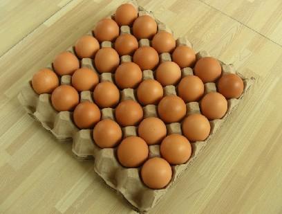 manbetx万博官网下载鸡蛋蛋托厂家批发