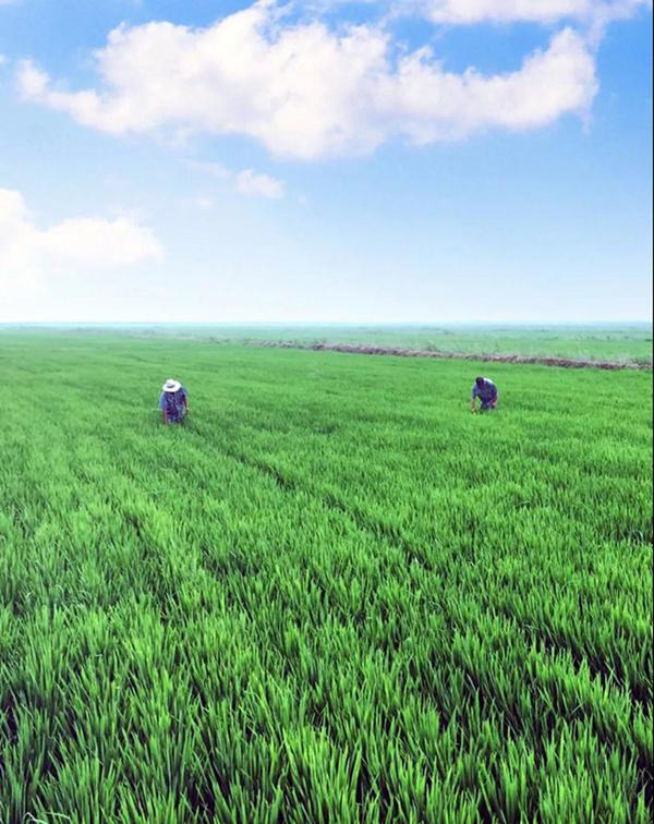 盘锦大米产地环境