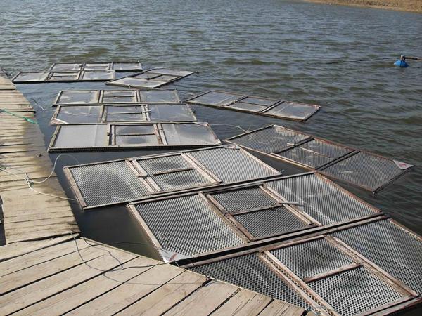 河道养蟹技术