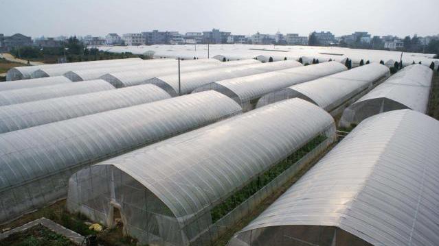 广西蔬菜地膜厂家