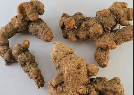 苍术的高产种植技术都有哪些?