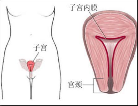 产后盆底肌怎么修复