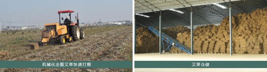 艾草产业园