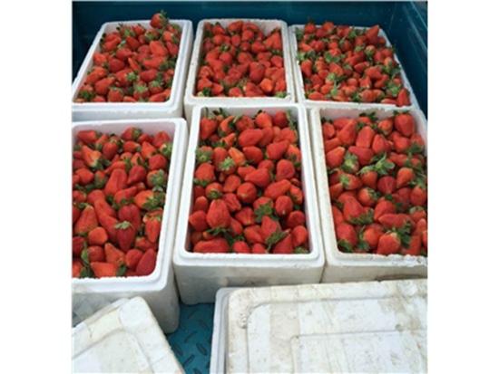 爱莎草莓苗