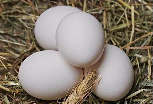 陜西中楮農牧生態科技有限公司