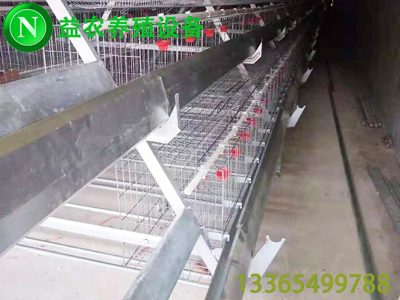 肉鸭养殖设备