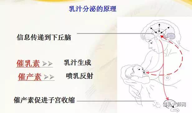 母乳成分分析