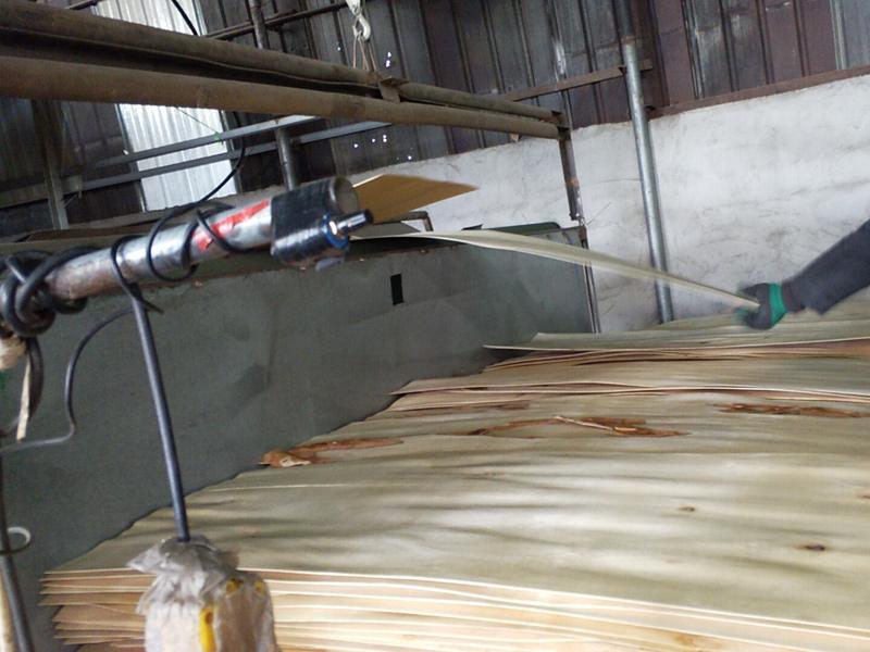 桦木夹芯板