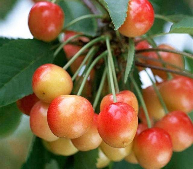 广西海吉星进口水果批发