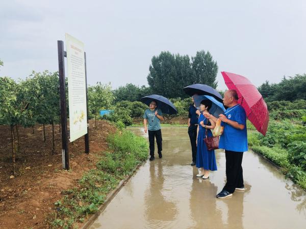 2019.7.31西北农业大学药学院赵丽教授参观山楂基地
