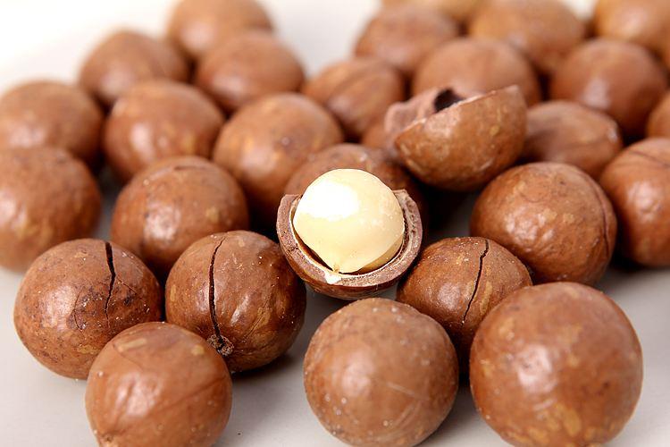 广东澳洲坚果生产商