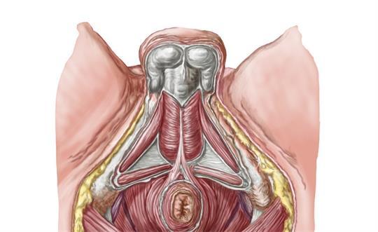 产后盆底肌修复