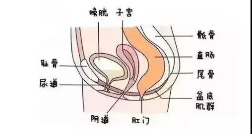 盆底肌修复仪器