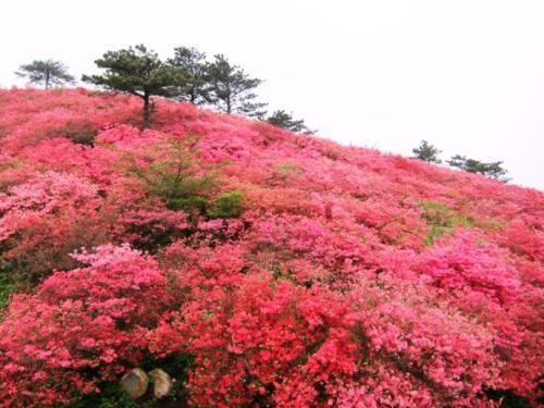 芙蓉山四月万亩花卉