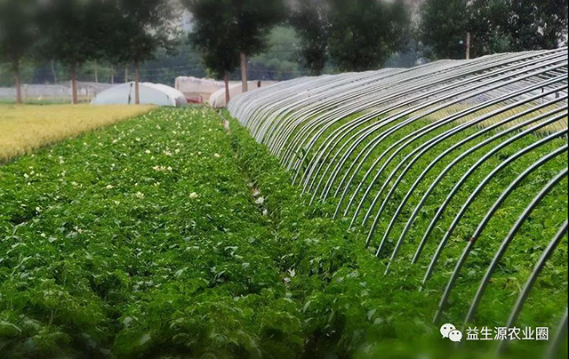 温室大棚蔬菜温度、光照、湿度的调控技术,超级实用!