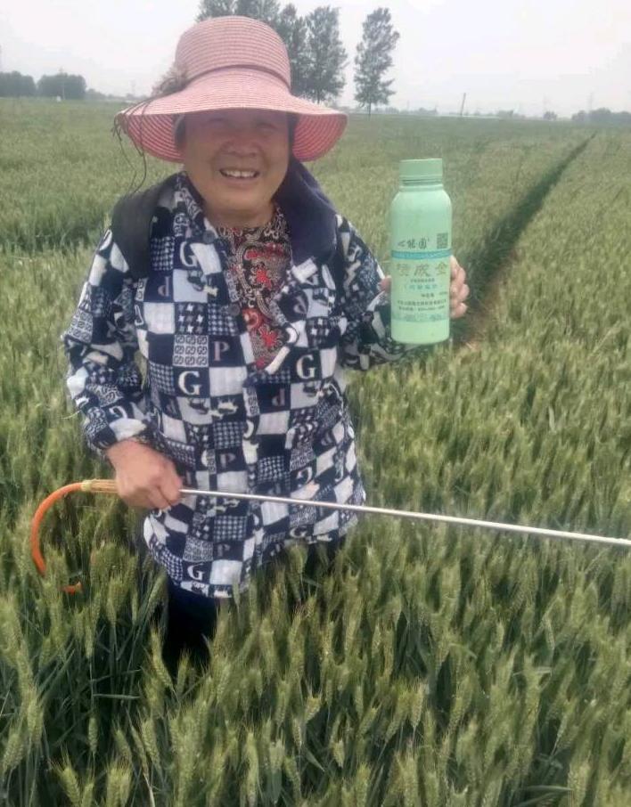小麦生长时间