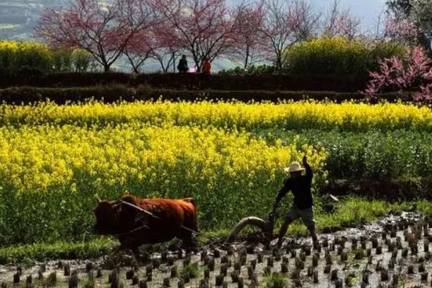 """开春用肥高峰期,13种肥料上的""""禁忌""""你知道吗?"""