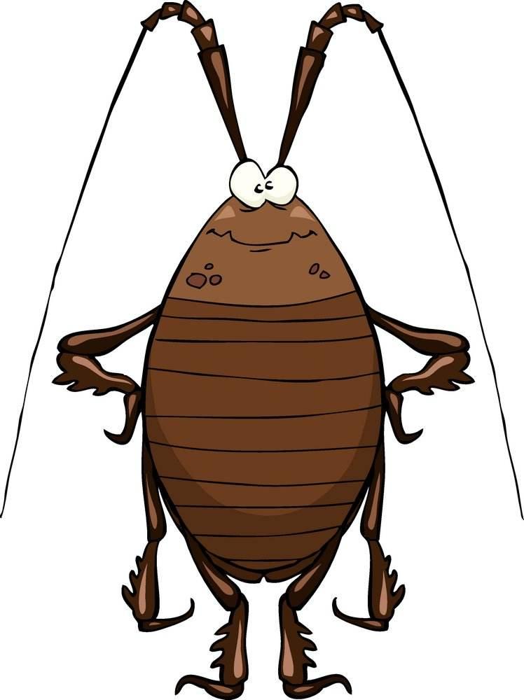 三門峽滅蟑螂
