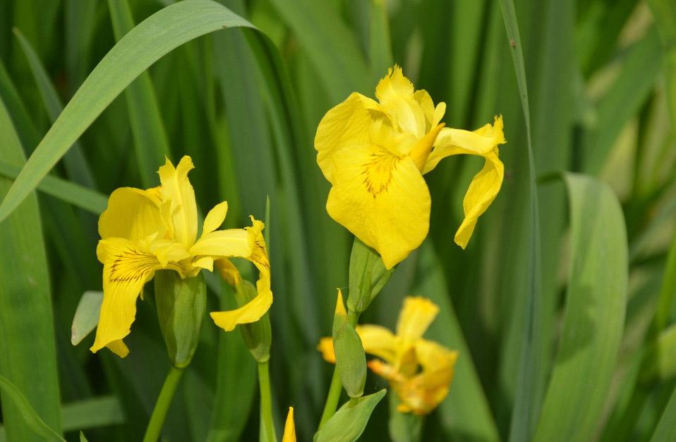 地被草花类