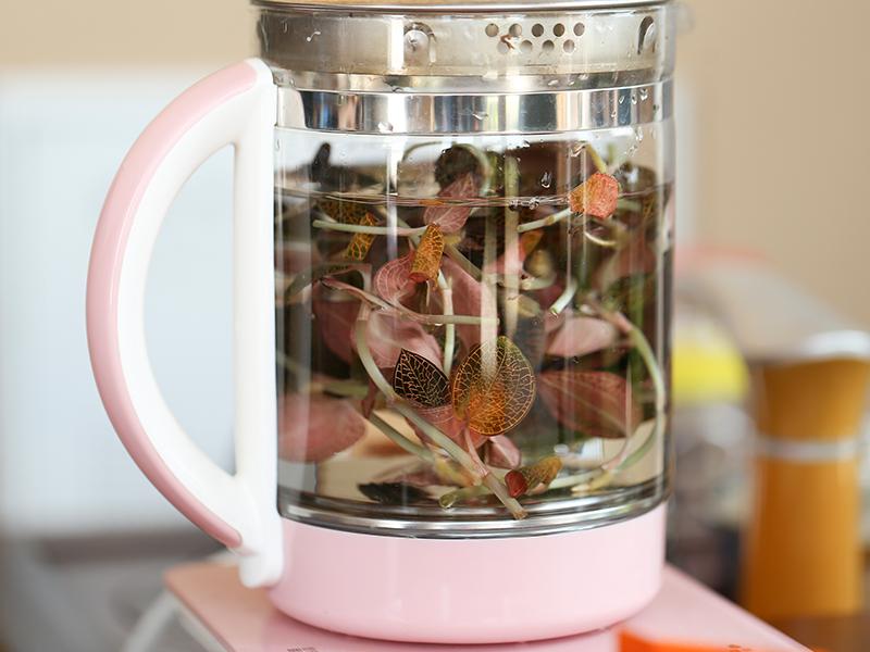 金线莲煮水