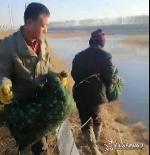 黑龙江鲶鱼沟实业集团干劲十足抢农时 疫情防控和春耕生产两不误