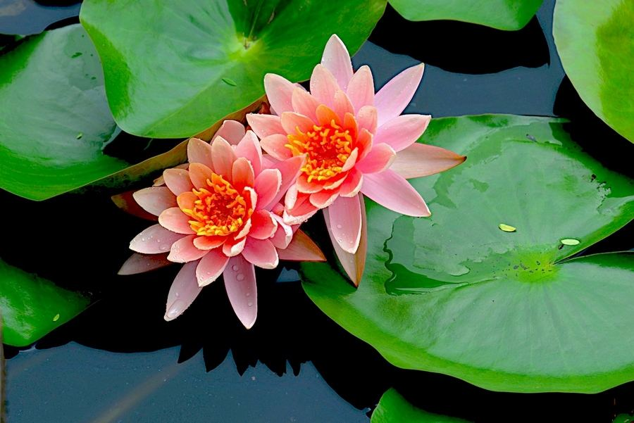 云南水生植物